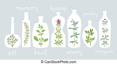 Aromatico, piante, in, bottiglie,