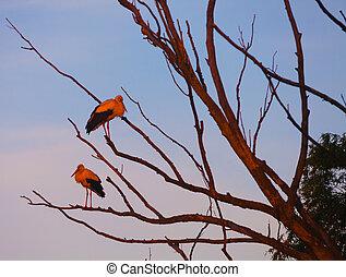 Storks on a background of blue sky