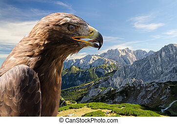 Aerial view of Alps mountains landscape with golden eagle...