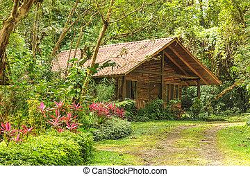 Wooden log house in a tropical rain forest - Lush green rain...