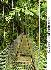 Empty hanging metal bridge in tropical forest - A wooden...