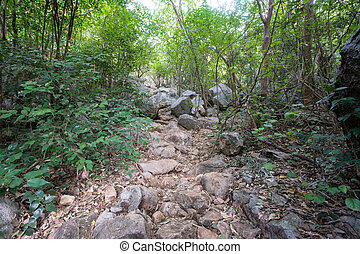 Walkway in Mountains ,Samroiyod