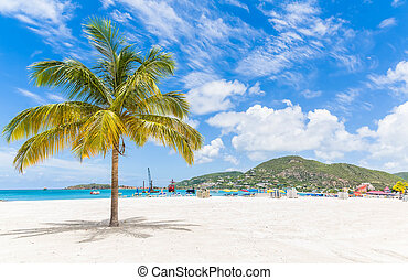 Palm Tree on St Martin Beach - Palm tree on a beautiful...