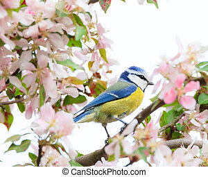 Little bird in beautiful tree - Little bird in beautiful...