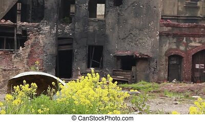 yellow flowers in a ghost town - grim ghost town landscape