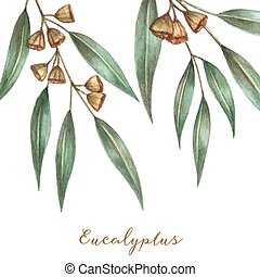 Watercolor eucalyptus leaves and branches Vector...