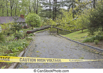 Caution Tape, Tree and Wires Down on Road - A neighborhood...