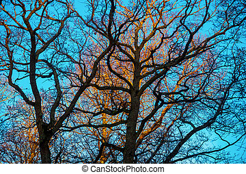 Bare trees on sunny day with blue sky in winter