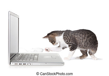 Adorable Kitten Using Laptop Computer - Kitten Using Laptop...