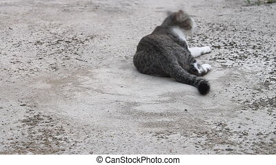 Siamese cat relaxing on concrete