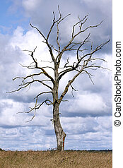 Dead tree standing alone in natural environment