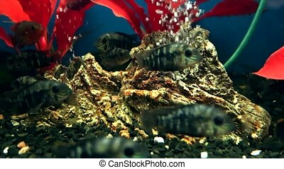 Exotic fishes in Aquarium - Exotic fishes in an Aquarium