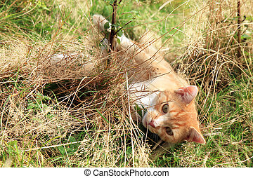ginger cats playing on meadow Sunny summer day