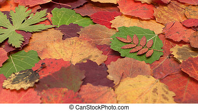Autumn sheet background - Autumn sheet insulated on white...