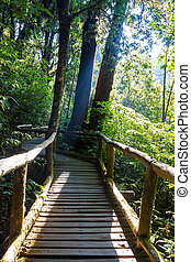 Ang Ka Nature Trail at Doi Inthanon National Park, Chiang...