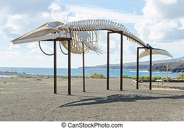 whale skeleton, horizontal photo, Fuerteventura, Canary...