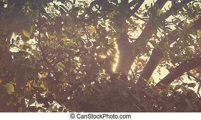 Branches in wind with glitter Sun flare Vintage color