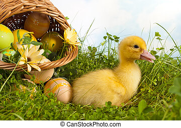 Easter basket with duckling