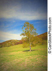 Beautiful landscape with birch