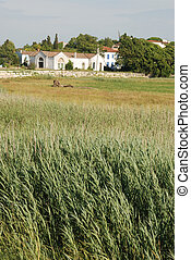 Gironde side in Charentes, Talmon