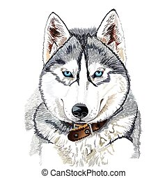 Siberian husky head - Vector portrait of Siberian husky head...