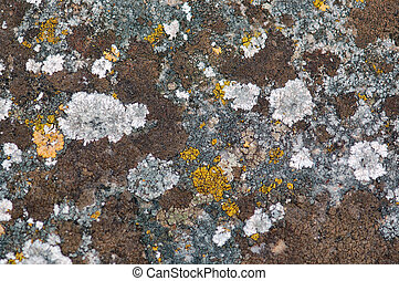 stone fungus - Weathered stone with yellow fungus Abstract...