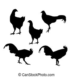Hen and Rooster black silhouette on white background vector...