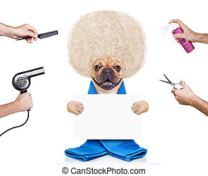 grooming dog - hairdresser dog ready to look beautiful at...