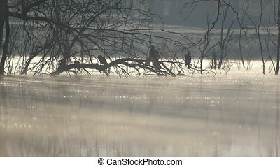 cormorants in the cold morning