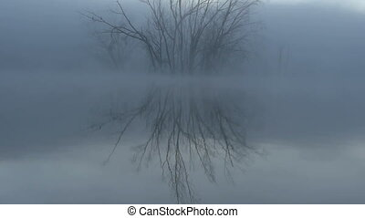 tree and reflection in the water
