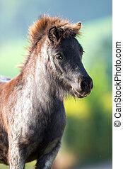 sommar, huvud, ponny, Uppe, nära