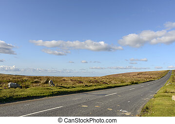 sheep along the road in the moor, Dartmoor