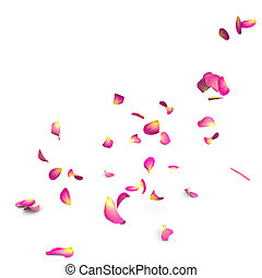 Rose petals fall to the floor Isolated background