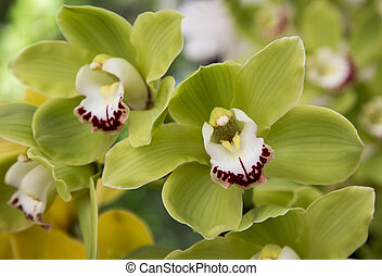 flowers bloom orchids - orchid flowers grow in the park,...