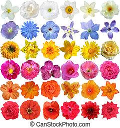 grande, seleção, de, Vário, flores,...