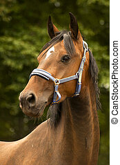 Porträt, Pferd