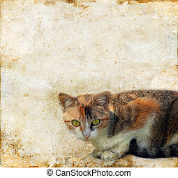 Cat on a Grunge Background