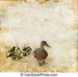 Family of Ducks on a Grunge background
