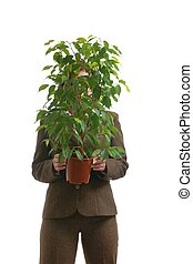 Business woman hiding behind green ficus plant - isolated -...