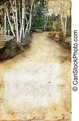 Birch Trees on a grunge background - path through the birch...