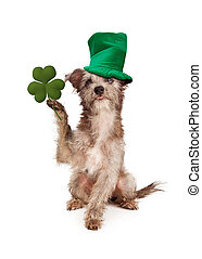 Dog With Clover and Green Hat - A little terrier mixed breed...