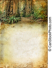 Redwood Forest above a Grunge Background - Redwood forest...
