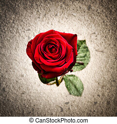 Single red rose against a textured background - Red love...