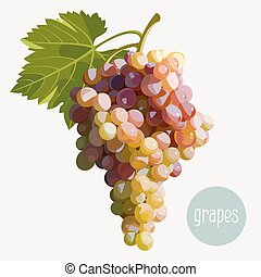 Grapes - Vector illustration of a bunch of grapes