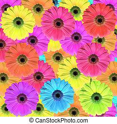 Gerbera daisy - gerbera daisy flowers
