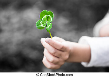 Four-Leaved Clover in a Child Hand - A child hand present a...