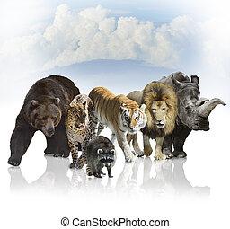 Wild Mammals