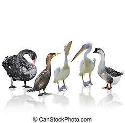 Waterbirds - Digital Painting Of Waterbirds With Reflection