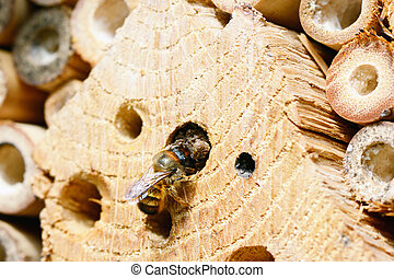 wild bee in insect shelter