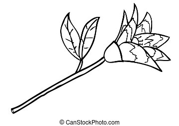 hand draw sketch of flower, isolated on white